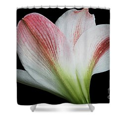 Amaryllis Shower Curtain by Judy Whitton