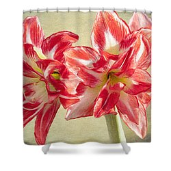 Amaryllis Red Shower Curtain by Jeff Kolker