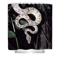 Amazon Tree Boa Shower Curtain by James Brunker