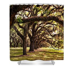 Amber Archway Shower Curtain