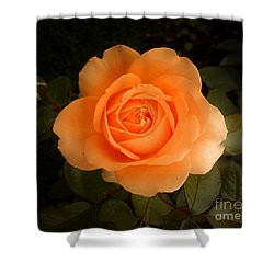 Shower Curtain featuring the photograph Amber Flush Rose by Hanza Turgul