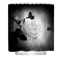 Shower Curtain featuring the photograph Ambridge English Rose by Louise Kumpf