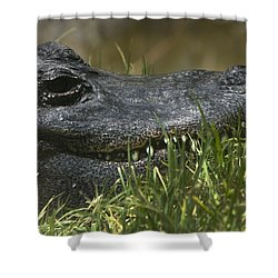 Shower Curtain featuring the photograph American Alligator Closeup by David Millenheft