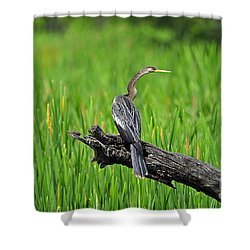 American Anhinga Shower Curtain by Al Powell Photography USA