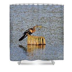 American Anhinga Angler Shower Curtain