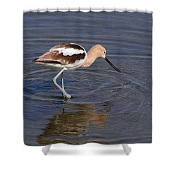 American Avocet Shower Curtain by Bob and Jan Shriner