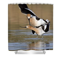 American Avocets Shower Curtain