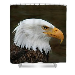 American Bald Eagle Shower Curtain by Bob and Jan Shriner