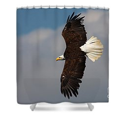 American Bald Eagle In Flight Shower Curtain by Nick  Biemans