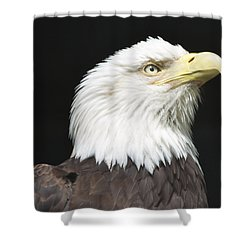 American Bald Eagle Profile Shower Curtain by Richard Bryce and Family