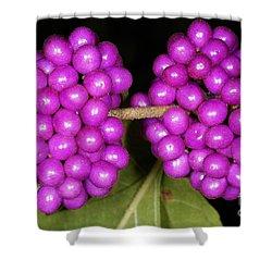 American Beautyberry Shower Curtain by Scott Camazine