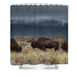 American Bison On The Prairie Shower Curtain