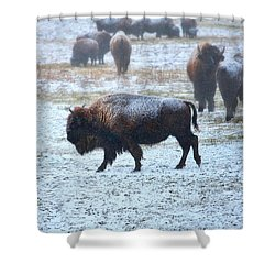 American Buffalo Shower Curtain by Pat Cook