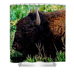 American Buffalo Yellowstone Painting Shower Curtain by Bob and Nadine Johnston