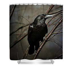 American Crow Shower Curtain by Lois Bryan