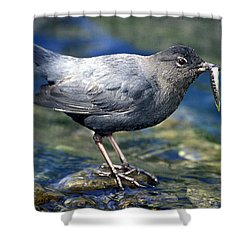 American Dipper Shower Curtain