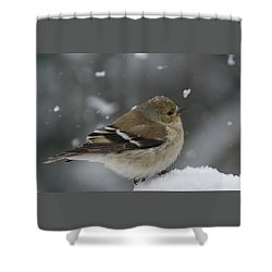 American Goldfinch In Winter Shower Curtain