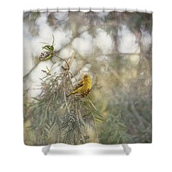 American Goldfinch In Winter Plumage Shower Curtain by Angela A Stanton