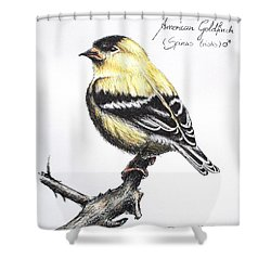 American Goldfinch Shower Curtain by Katharina Filus