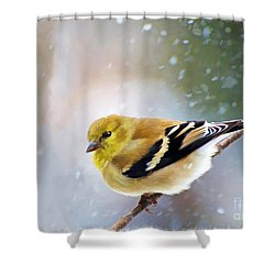 American Goldfinch Snowy Day With Frame - Digital Paint 1 Shower Curtain by Debbie Portwood