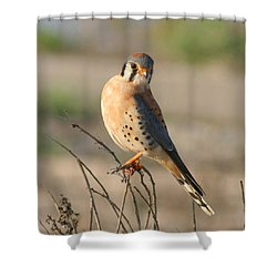 American Kestrel Shower Curtain by Bob and Jan Shriner