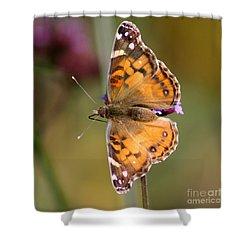 American Lady Butterfly Shower Curtain by Karen Adams