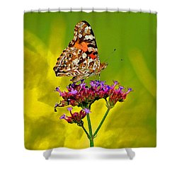 American Painted Lady Butterfly Shower Curtain by Karen Adams