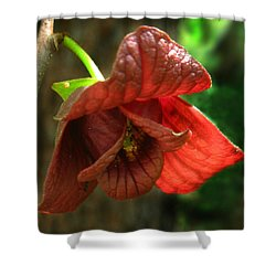 American Pawpaw Shower Curtain