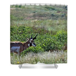 American Pronghorn Buck Shower Curtain by Karon Melillo DeVega