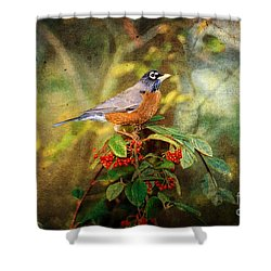 American Robin - Harbinger Of Spring Shower Curtain by Lianne Schneider