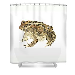 American Toad Shower Curtain by Cindy Hitchcock