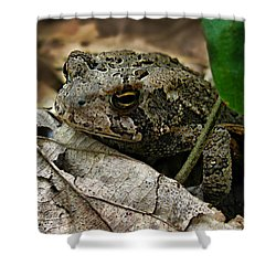 Shower Curtain featuring the photograph American Toad by William Tanneberger