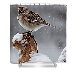 American Tree Sparrow In Snow Shower Curtain