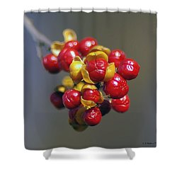 American Winterberry Shower Curtain by Brian Wallace