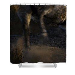 Americano 12 Shower Curtain