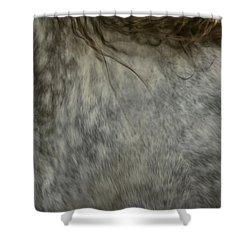 Americano 6 Shower Curtain