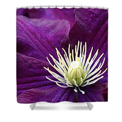 Amethyst Colored Clematis Shower Curtain by Kay Novy