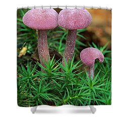 Amethyst Deceiver Shower Curtain by Thomas Marent