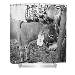 Amish Donkey At Action Shower Curtain by Eric  Schiabor