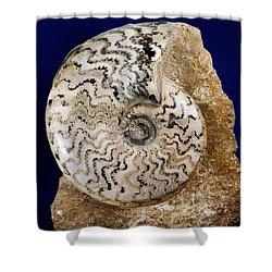 Ammonite Fossil Shower Curtain by Scott Camazine