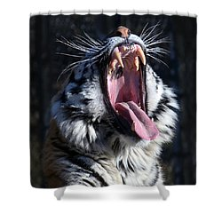 Amor Tiger Shower Curtain