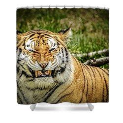Amur Tiger Smile Shower Curtain by LeeAnn McLaneGoetz McLaneGoetzStudioLLCcom