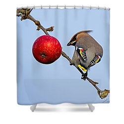 An Apple A Day... Shower Curtain by Torbjorn Swenelius