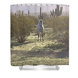 Shower Curtain featuring the photograph An Arizona Morning by Ruth Jolly