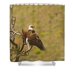 An Eagle Stretching Its Wings Shower Curtain by Jeff Swan