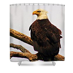 Shower Curtain featuring the photograph An Eagle's Perch by Polly Peacock