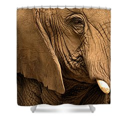 Shower Curtain featuring the photograph An Elephant's Eye by Nadalyn Larsen