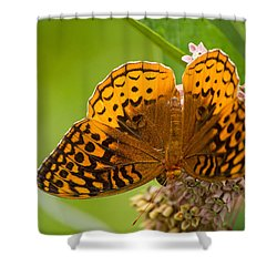 Great Spangled Fritillary Shower Curtain