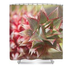 Ananas Comosus - Pink Ornamental Pineapple Shower Curtain by Sharon Mau