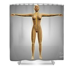 Anatomy Of Female Body With Nervous Shower Curtain by Stocktrek Images